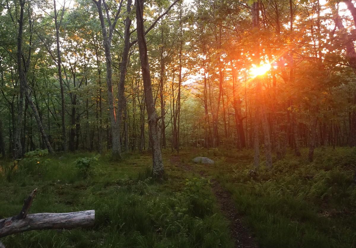 860 miles on the Appalachian Trail: VirginiaBlues